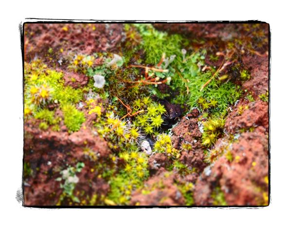 Moss.blog