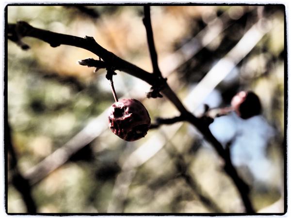 Cherrytree3.blog