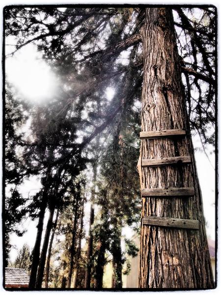 Treehouse.blog