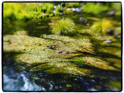 Watermoss