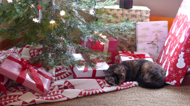 Christmaskitty
